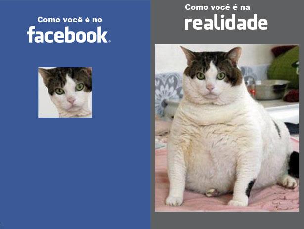 facebook-gatinho