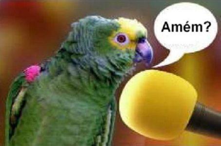 _papagaio