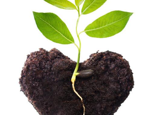 A importância de um coração ensinável