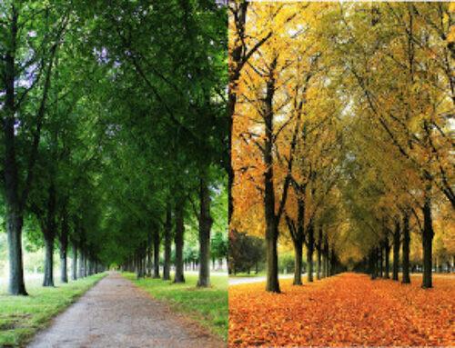 As estações e o modo como enxergamos a vida